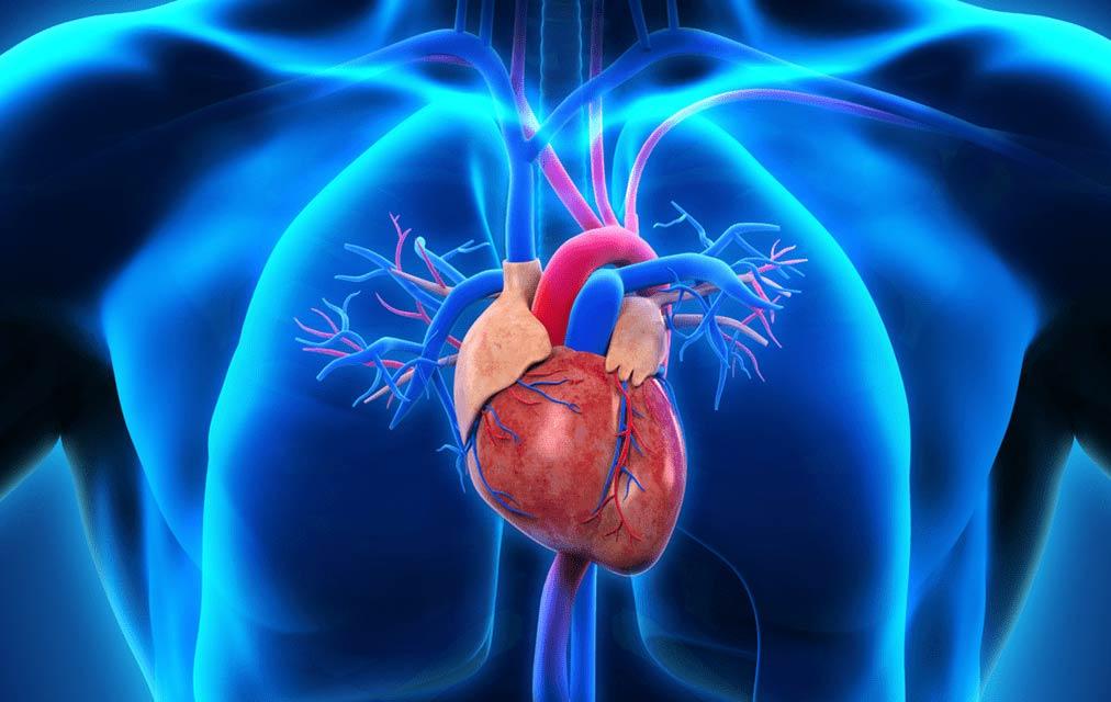 Ischemische hartziekte is de meest voorkomende doodsoorzaak in ons land.